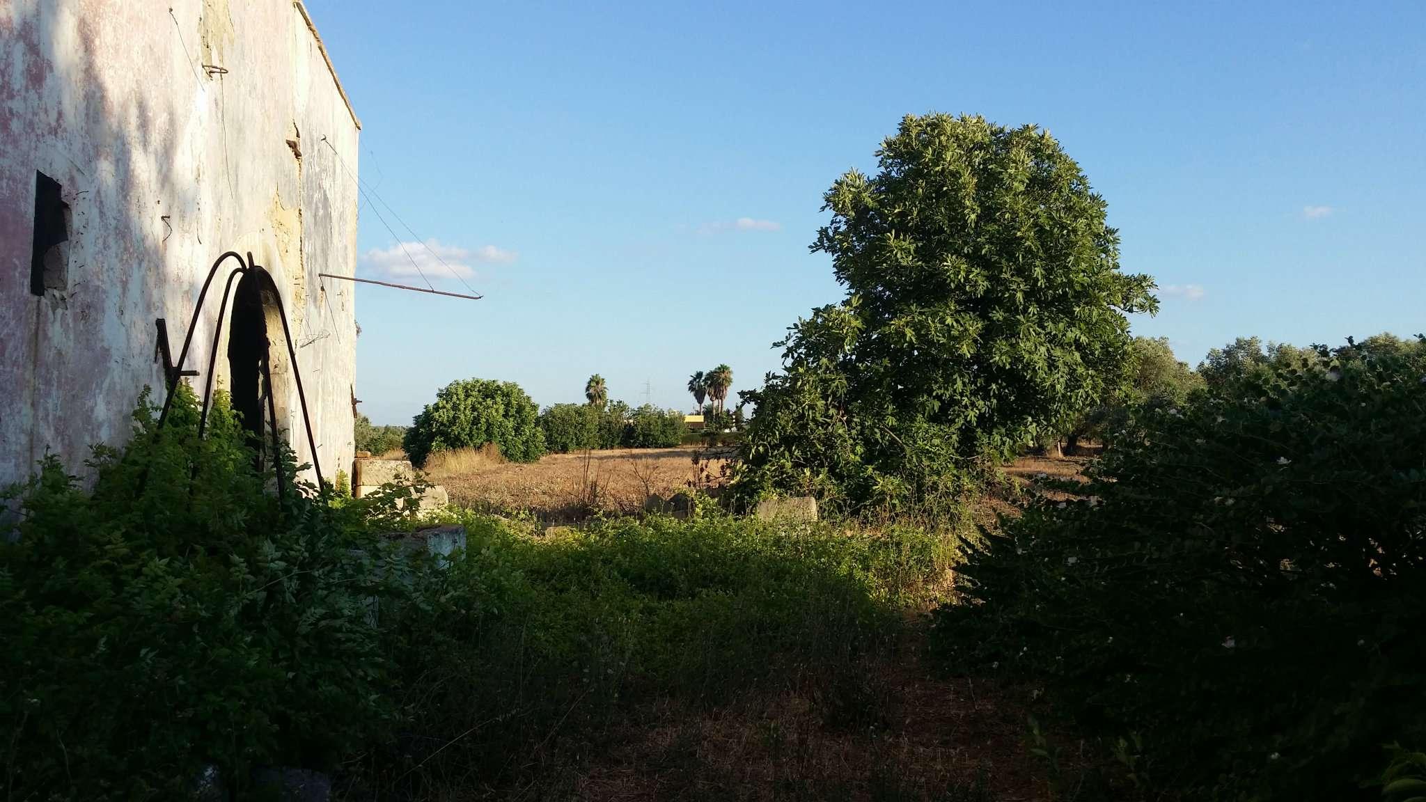 Foto 5 di Casa Colonica contrada Paduli, Cutrofiano