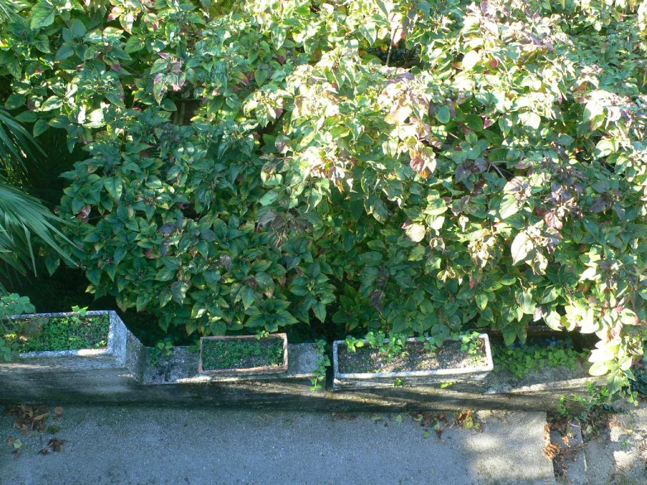 Ampio appartamento in villa con giardino vista golfo e cantina, foto 11